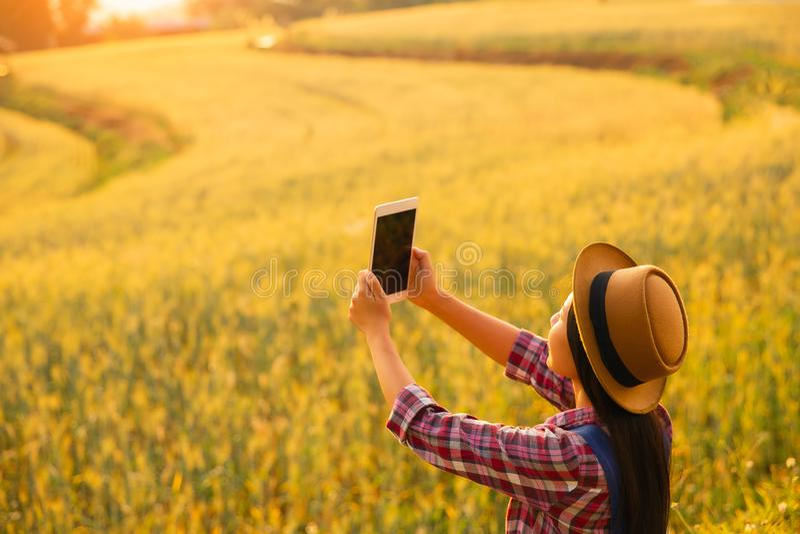 Producteur de fille dans la chemise de plaid dans le domaine de bl? sur le fond de coucher du soleil image stock