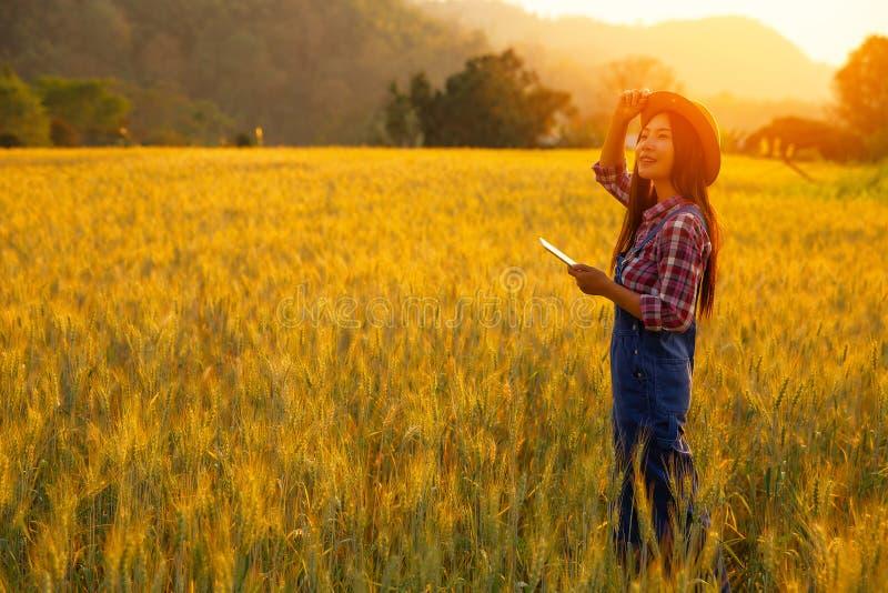 Producteur de fille dans la chemise de plaid dans le domaine de bl? sur le fond de coucher du soleil photo stock