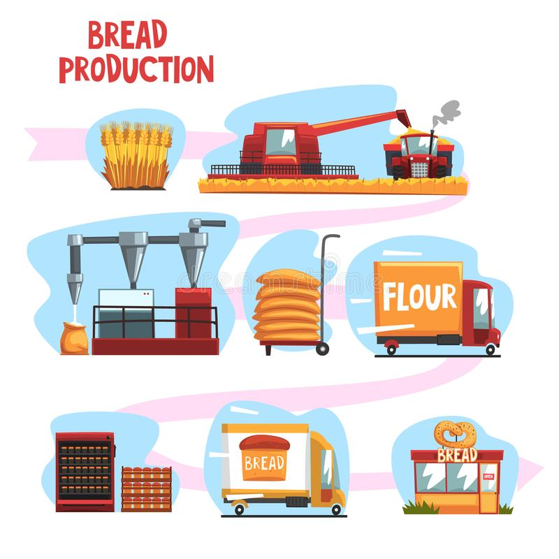 Production of bread from wheat harvest to to freshly baked bread in shop set of cartoon vector Illustrations. Isolated on a white background vector illustration
