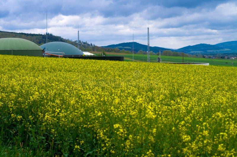 Production de biogaz au milieu de colza ol?agineux image libre de droits