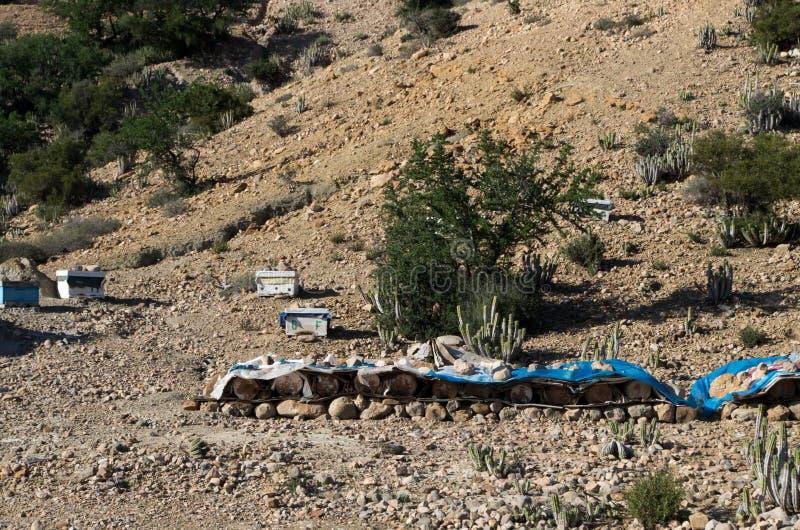 Production douce de miel au Maroc photographie stock libre de droits