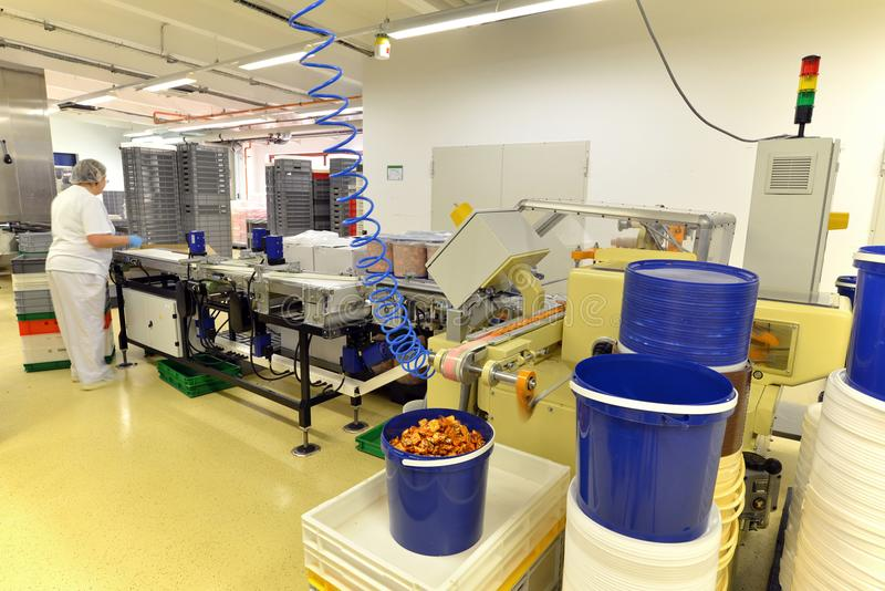 Production of pralines in a factory for the food industry - conveyor belt worker with chocolate stock images