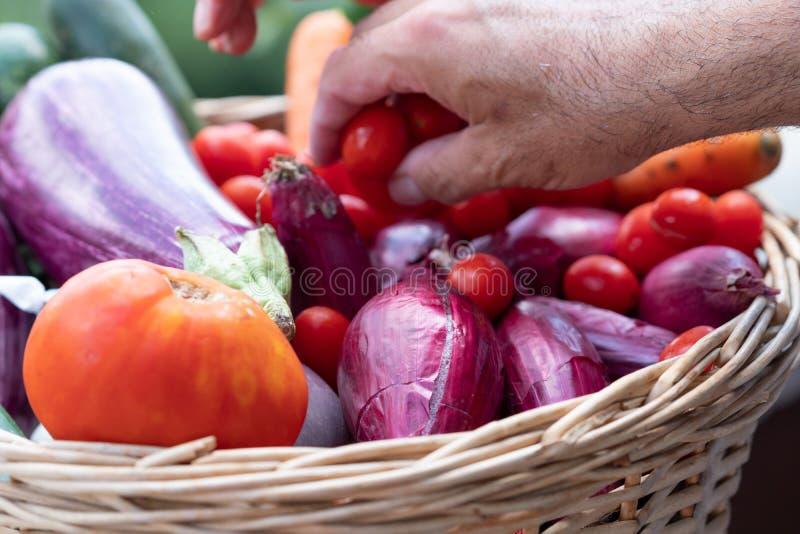 Producto-veh?culos frescos de vegetables foto de archivo libre de regalías