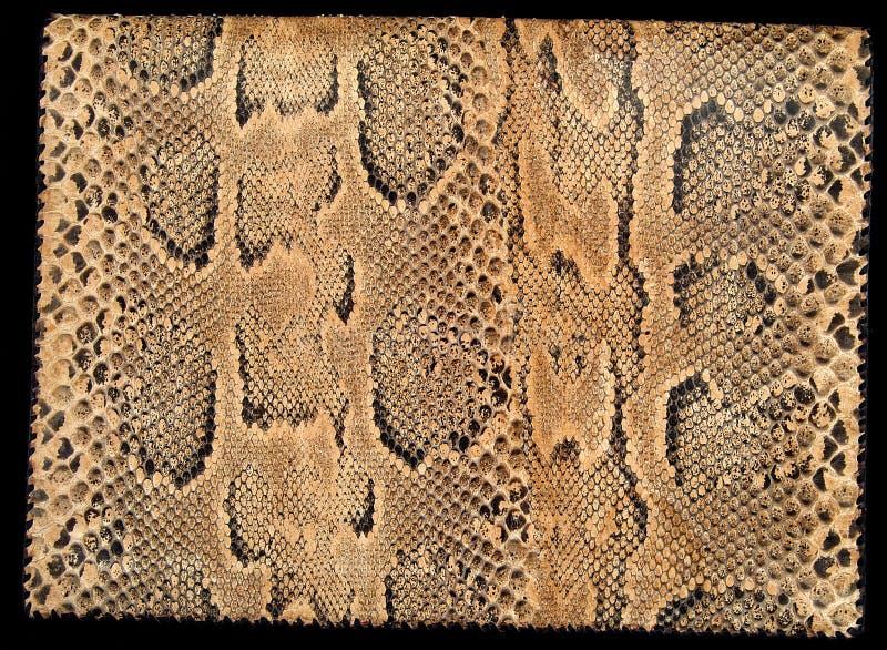 Productos de un cocodrilo y de una serpiente imagen de archivo