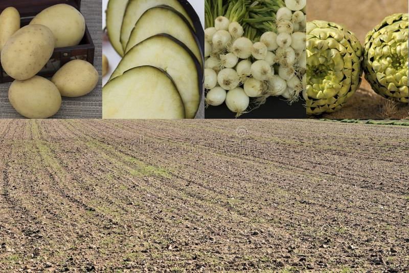 Products of the field. Field with seeds to produce vegetables that we consume stock photography