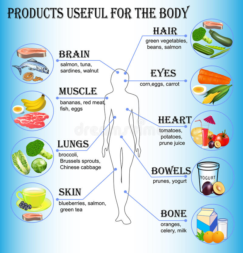 Of products useful for the human body royalty free illustration
