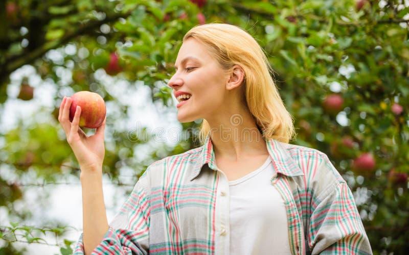 Produit naturel organique de produits agricoles Jour rustique d'automne de jardin de récolte de rassemblement de style de fille A photographie stock