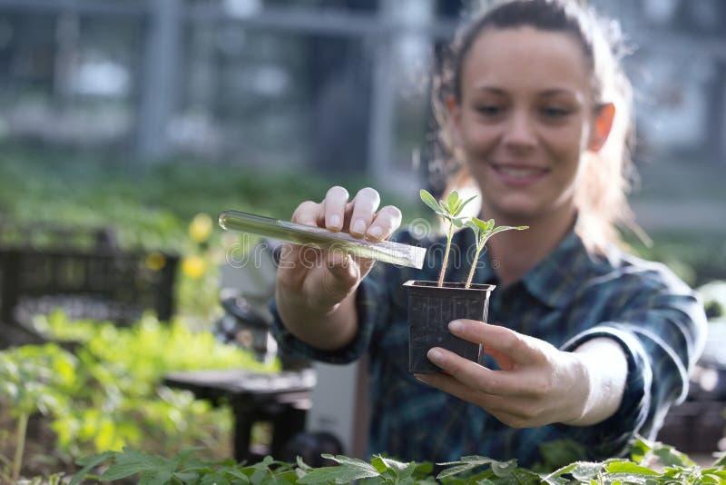 Produits chimiques de versement de femme d'agriculteur dans la jeune plante images libres de droits