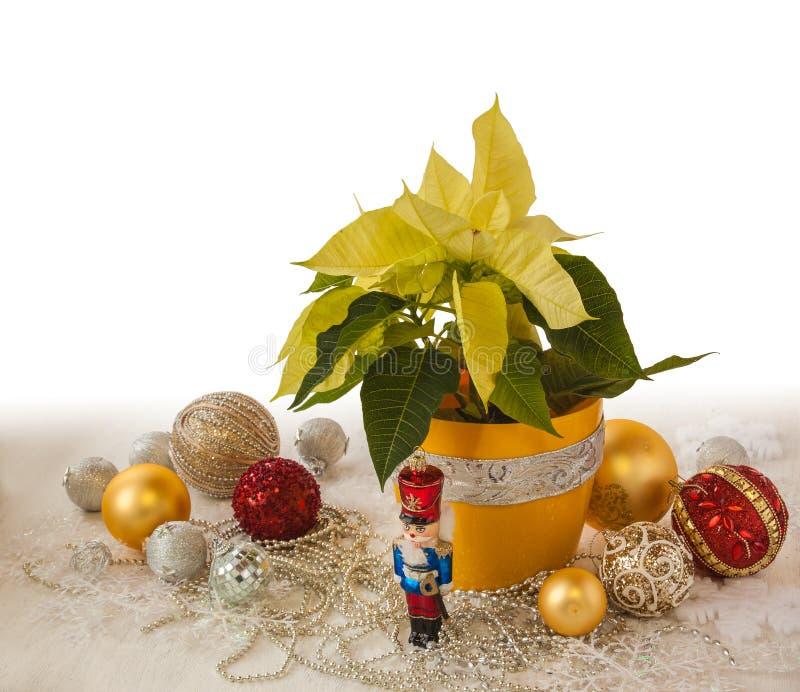 Download Produits De Décorations Jaunes De Poinsettia Et De Noël De La Masse Photo stock - Image du vacances, beau: 77153180