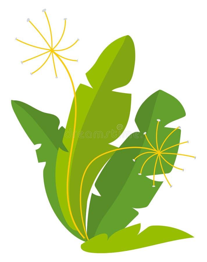 Produkt des strengen Vegetariers, Rucola oder Fenchel, Ernte-Vektor vektor abbildung