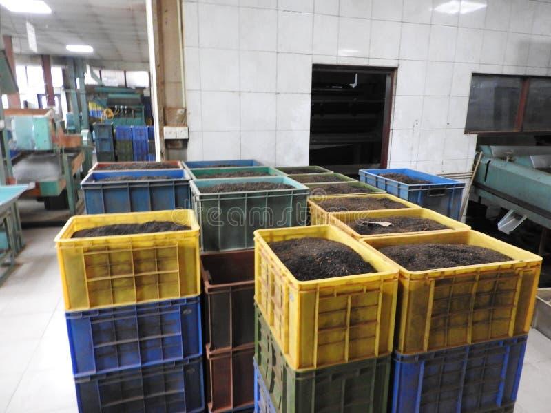 Produktion av att bearbeta teblad Sri Lanka arkivfoton