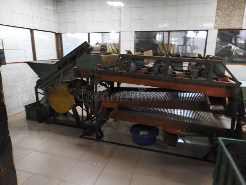 Produktion av att bearbeta teblad Sri Lanka fotografering för bildbyråer