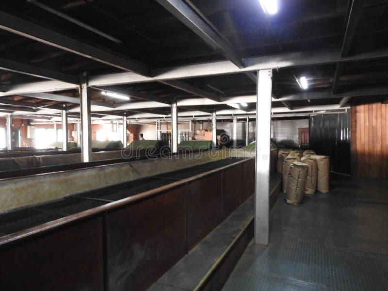 Produktion av att bearbeta teblad Sri Lanka arkivbild