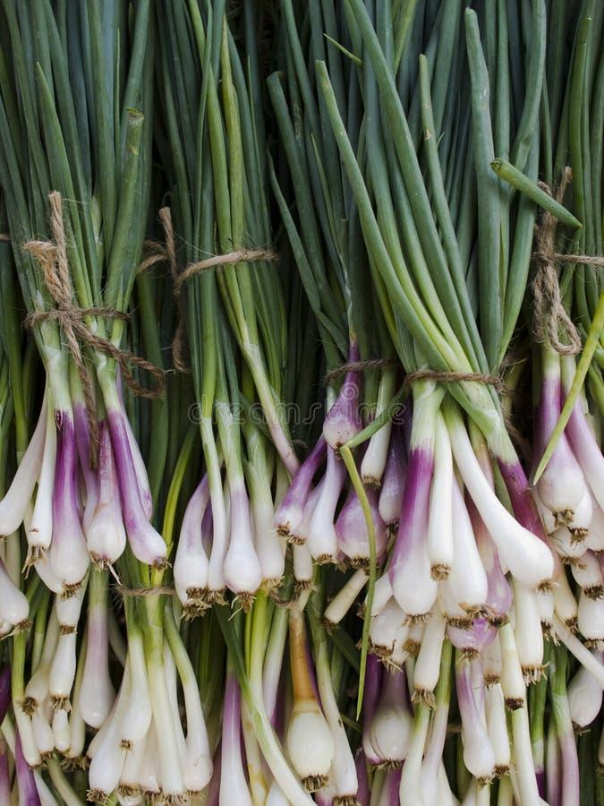 Produkty spożywcze - cebuli organicznie zielony tło obraz royalty free