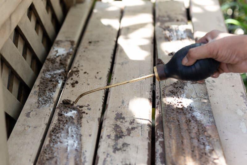 Produto químico de pulverização do inseticida do trabalhador para o controlo de pragas da térmita na plataforma de madeira imagens de stock