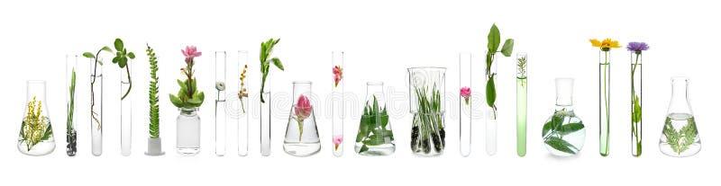 Produtos vidreiros de laborat?rio com as plantas no fundo branco imagem de stock royalty free