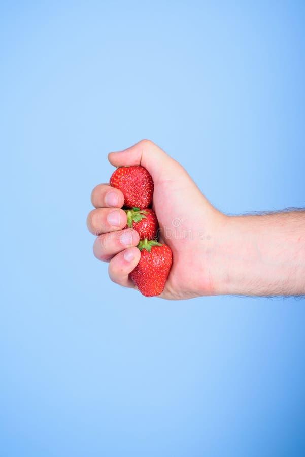 Produzieren des frischen Erdbeersafts Hand hält roten süßen reifen Beerenblauhintergrund Zusammendrücken des frischen Erdbeersaft lizenzfreies stockbild