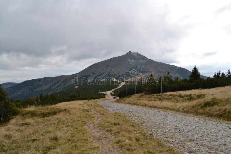Proef in de bergen stock foto