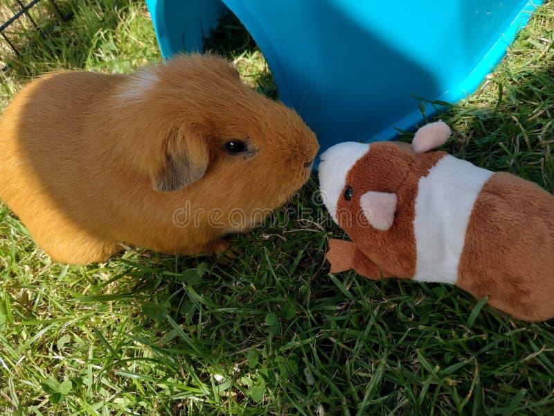 Proefkonijn en haar weinig vriend stock foto