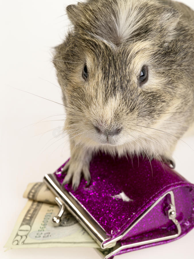 Proefkonijn en portefeuille met contant geld. stock fotografie
