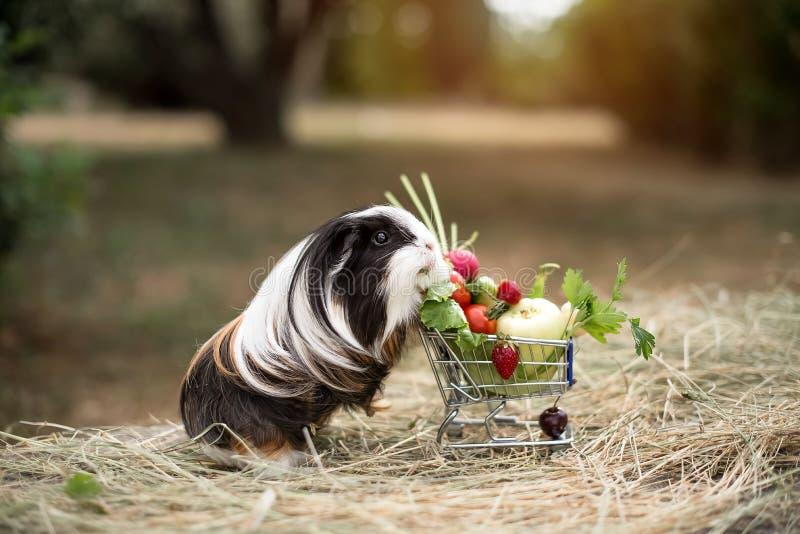 Proefkonijn en vruchten stock foto