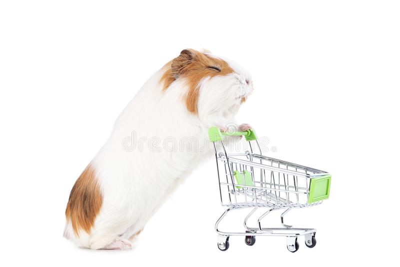 Proefkonijn met boodschappenwagentje stock fotografie