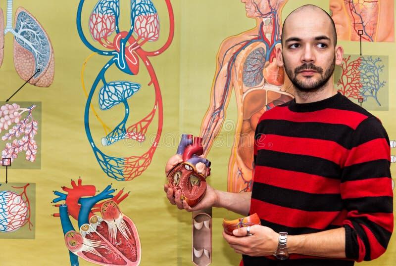Profesor de biología que muestra el modelo humano del corazón foto de archivo libre de regalías
