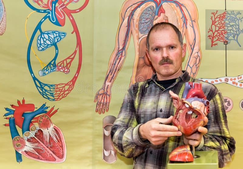 Profesor de biología que muestra el modelo humano del corazón ilustración del vector