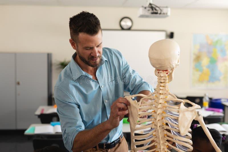 Professeur masculin fixant le modèle squelettique dans la salle de classe photographie stock libre de droits