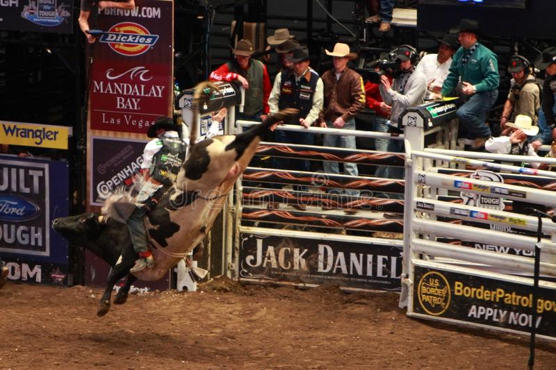 Professional Bull Rider tournament on Madison Square Garden royalty free stock photography