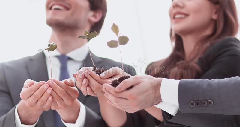 Professional business team showing the first sprouts stock image