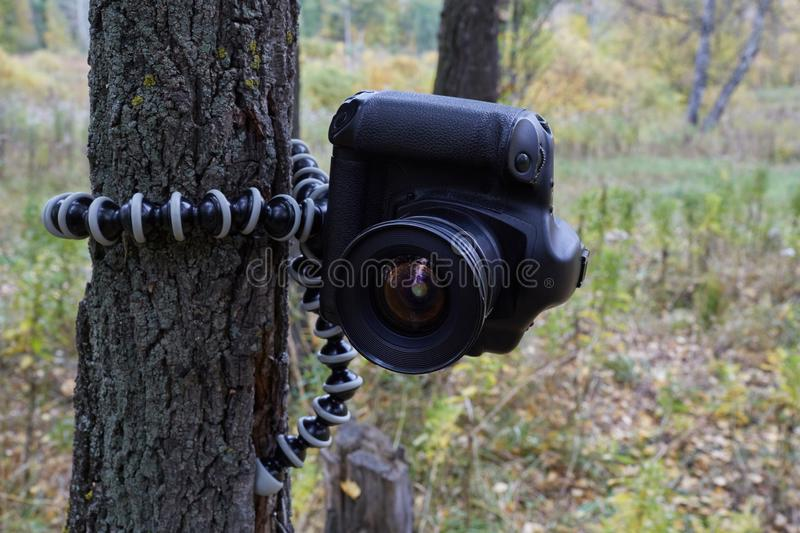 Professional camera hanging on flexible tripod on tree, blurred. Nature background, early autumn stock images
