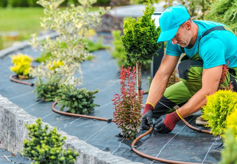 Plants Irrigation System. Professional Caucasian Gardener Building Plants Irrigation System in Developed Garden. Industrial Theme royalty free stock image