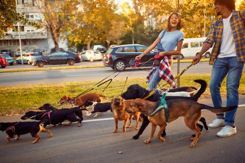 Professional couple dog walker with dogs enjoying in walk stock image