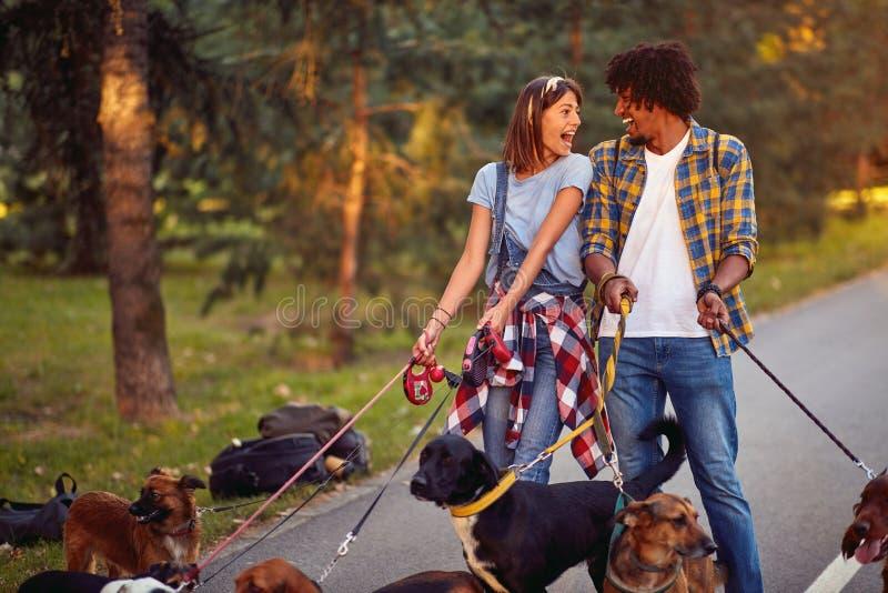 Professional couple dog walkers with dog enjoying in park. Professional couple dog walkers with group dog enjoying in park stock images