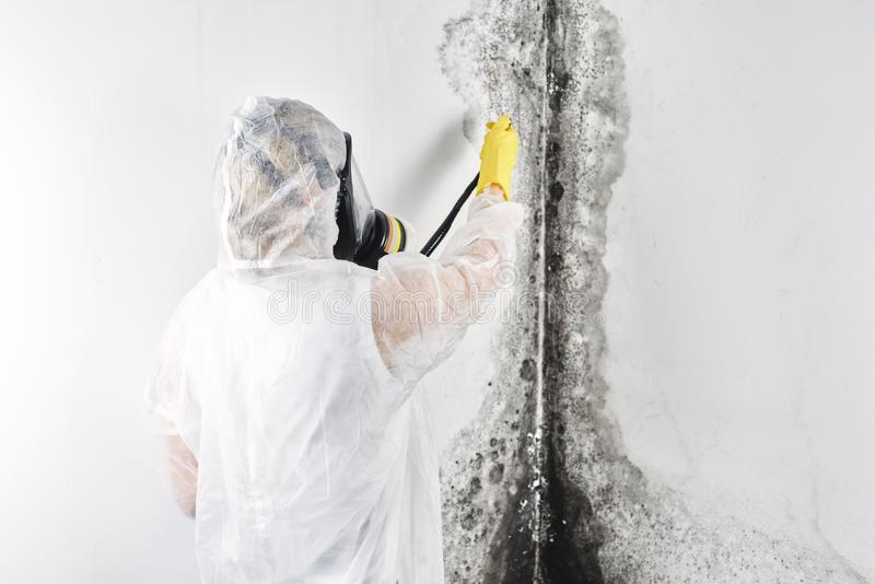 Black Mold Removal is Possible But Difficult