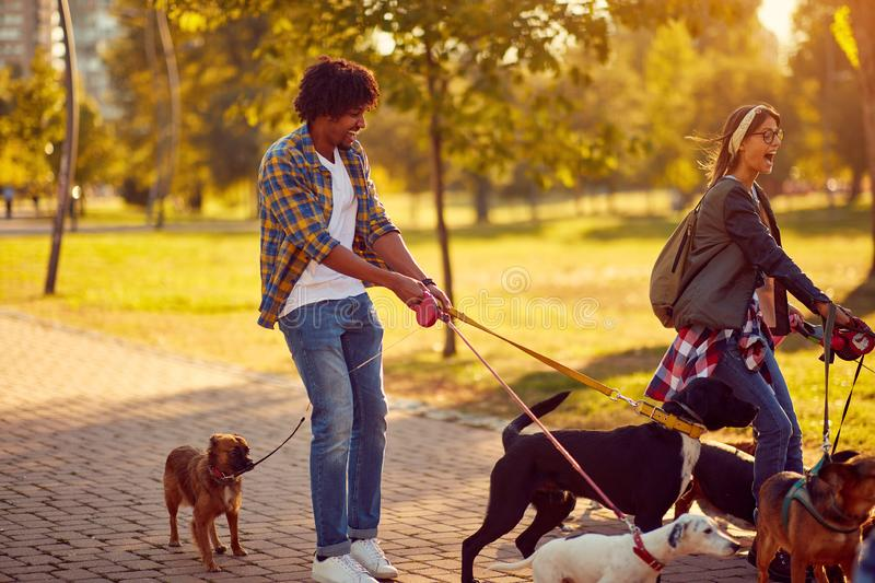 Professional Dog Walker - group of dogs with couple dog walker enjoying in walk city royalty free stock photography