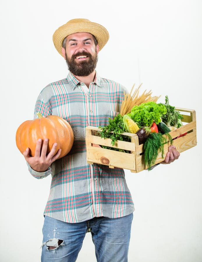 Professional farmer presenting basket. organic and natural food. happy halloween. harvest festival. man with rich autumn. Crop. bearded mature farmer. seasonal royalty free stock images