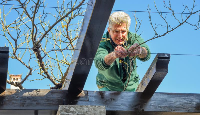 Professional gardener prepares plants in spring in the public garden.  stock photography