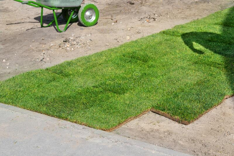 Professional gardener worker laying fresh artificially grown rolled lawn. Detail process of installation grass roll carpet at city. Park or backyard on bright royalty free stock image