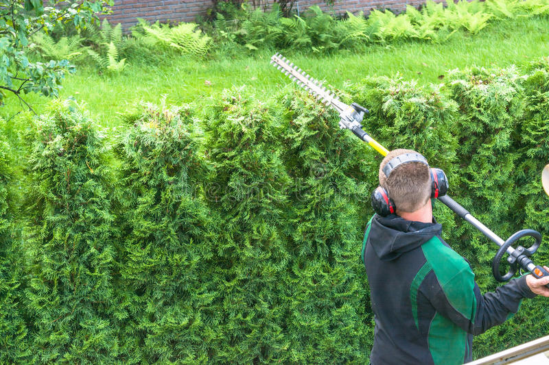 Professional hedges cutting. With gasoline telescopic hedge trimmer royalty free stock photo