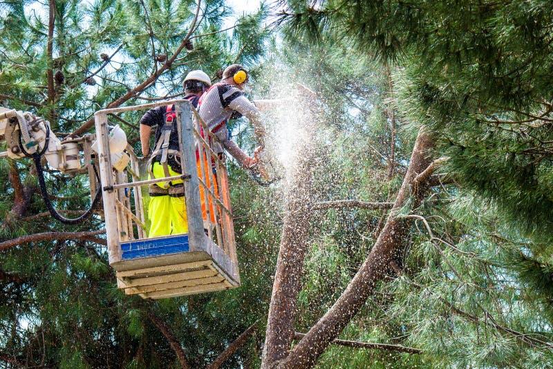 Professional Lumberjacks cuts trunks on the crane royalty free stock photography