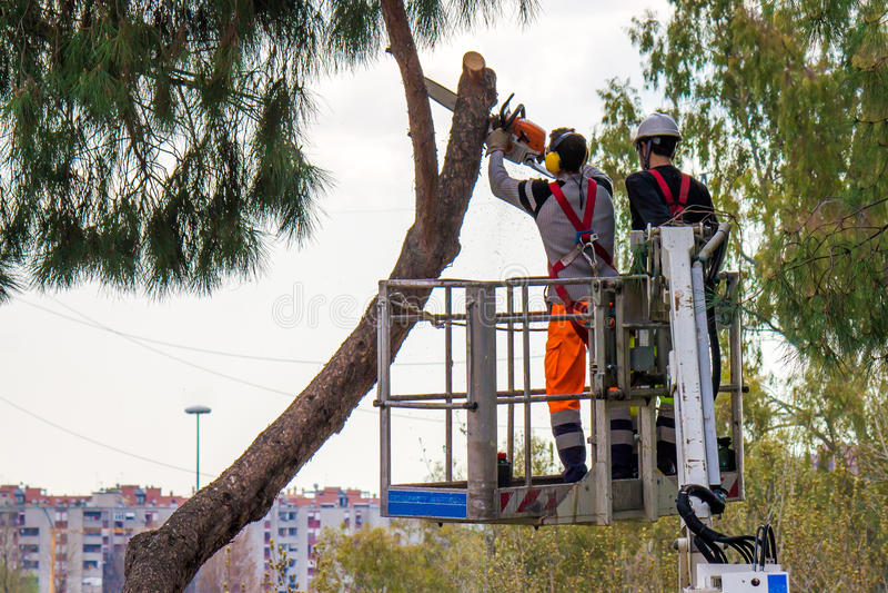 Professional Lumberjacks cuts trunks on the crane stock photography