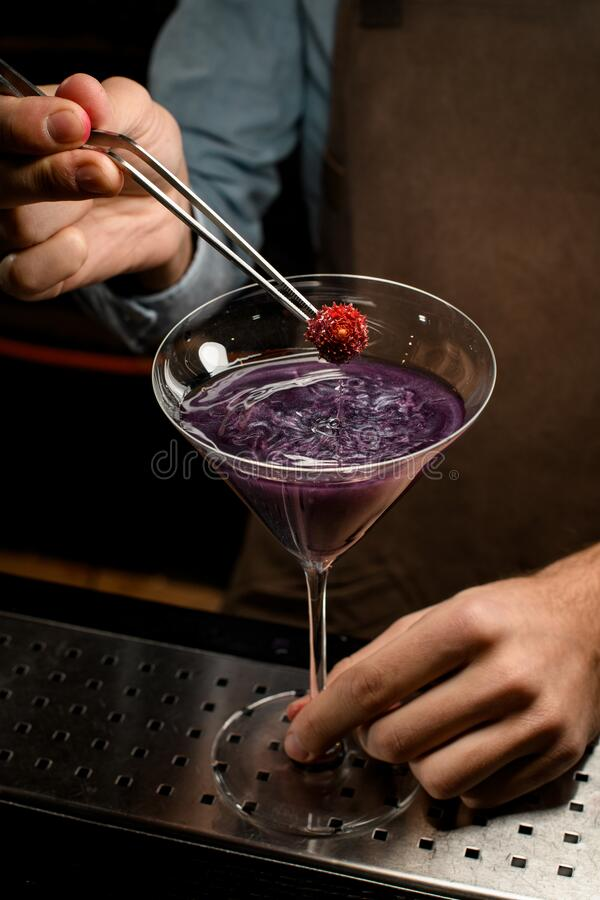 Professional male bartender decorated purple alcoholic cocktail in a martini glass with a red flower by tweezers royalty free stock photo