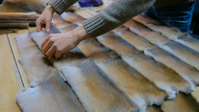 Skinner working with mink fur skin. Professional male skinner, furrier working with mink fur skin at atelier, workshop. Fashion and leatherwork concept royalty free stock photos