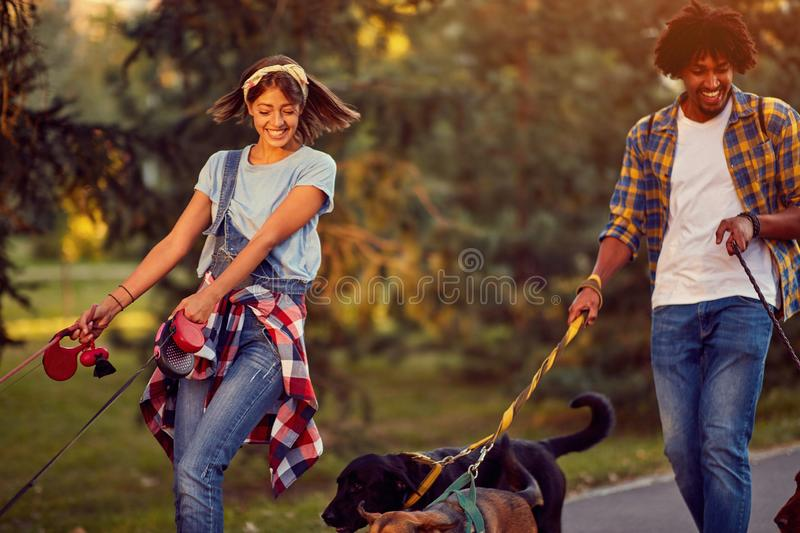 Professional man and woman dog walkers with dog enjoying in park. Professional men and women dog walkers with group dog enjoying in park stock image