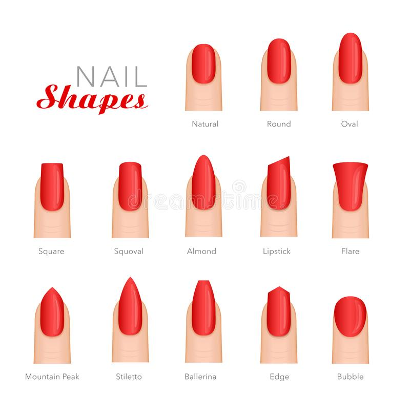 Professional Manicure Different Shapes Of Nails Vector Stock Vector ...