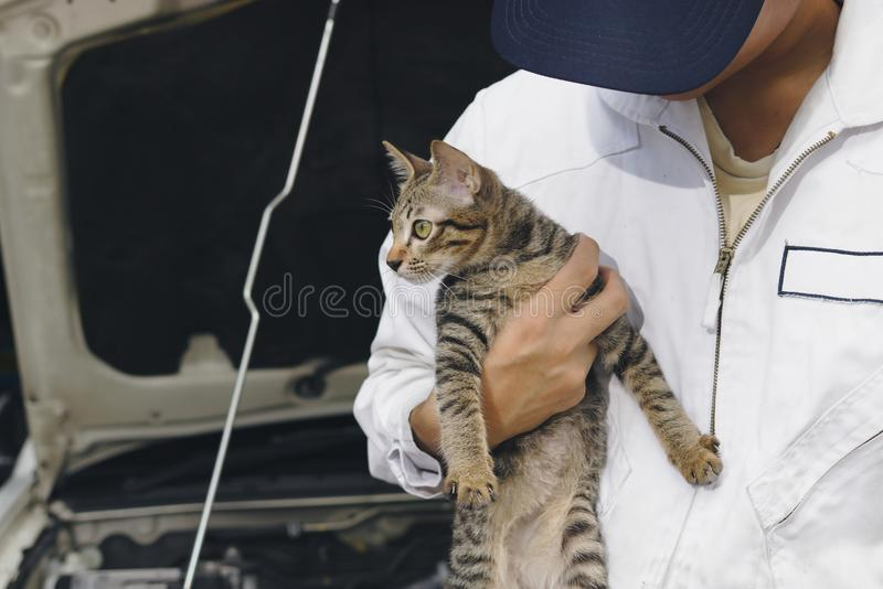 Professional mechanic man with cutie kitten against car in open hood at the repair garage. Car insurance concept. Professional mechanic man with cutie kitten royalty free stock images