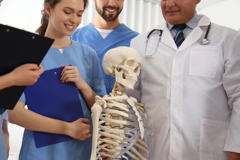 Professional orthopedist with human skeleton model teaching medical students royalty free stock photography