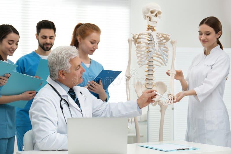 Professional orthopedist teaching medical students stock image